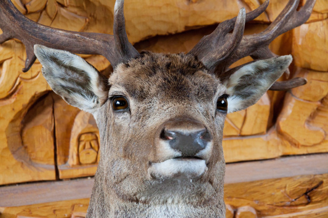 stuffed_deer_head